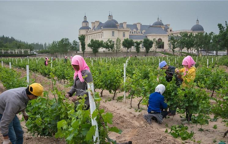 Ningxia : Les Routes de la Soie au service du secteur viticole